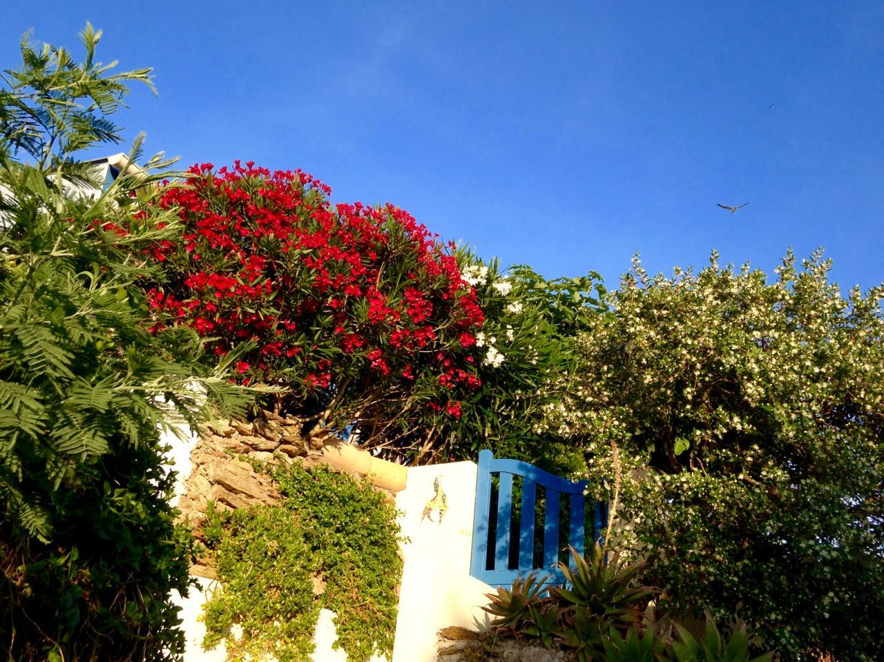 Entrée de la maison bleue